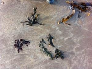 Seaweed wash