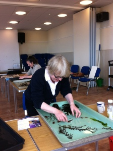Alisha working with seaweeds
