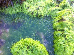 Green seabeds June 2013 075