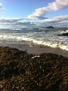 Heaped seaweed after autumn storm
