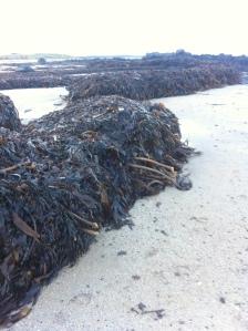 Seaweed pyres