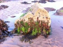 Sea lettuce and Laver