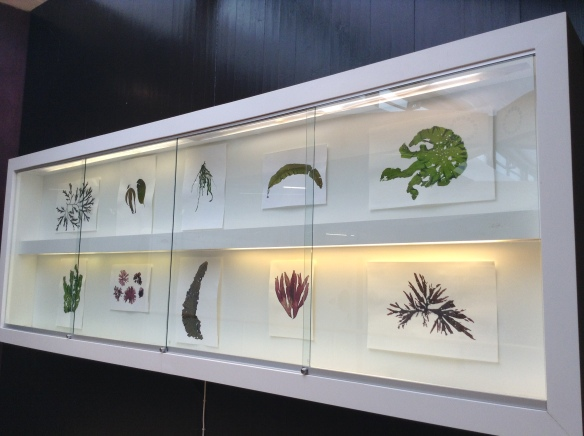 Sea Flora exhibition