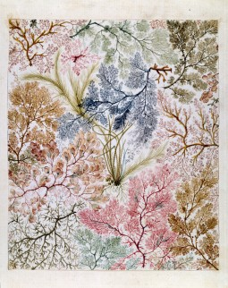 William Kilburn's seaweed fabric design, circa 1788