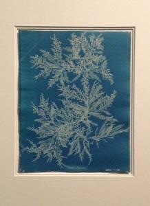 Anna Atkins - cyanotype