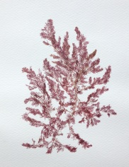 Sea Red_July 015