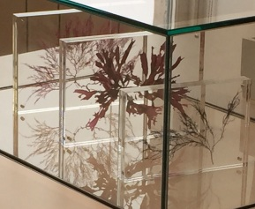 Seaweeds in Glass